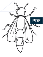 Características de la libélula.docx