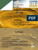 Obtinerea Biodieselului Din Alge Marine