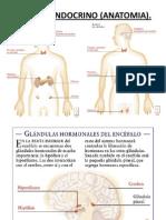 Clase7._HOTMONAS (1)