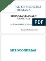 Mitocondrias y Lisosomas