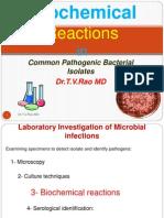 cdocumentsandsettingsadministratordesktopbiochemicalreactioninbacteriology-100912232040-phpapp01