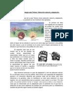 adaptación y selección natural.docx