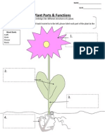flower exploration - assessment rubric