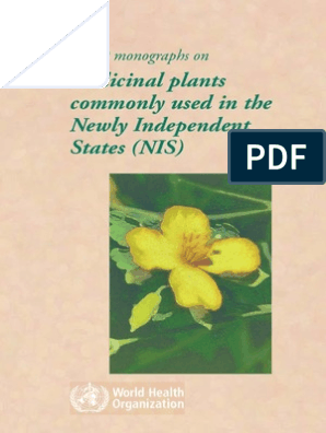 Plantago asiatica Chinese Plantain Garden Arnoglossa 5000 Graines de plantes m/édicinales