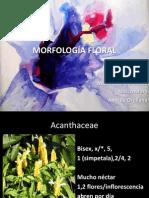 Morfología Floral.diapositivas..ppsx