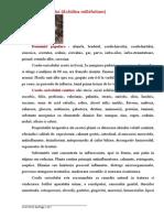 Coada Soricelului - Achillea Millefolium