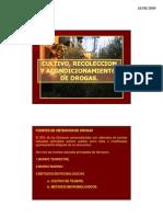 CULTIVO, RECOLECCION Y ACONDICIONAMIENTO DE DROGAS
