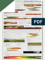 Paleo Diet Food List Infographic Copy