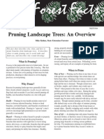 pruninglandscapetrees