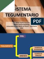 Sistema Tegumentario - Usmp 2014