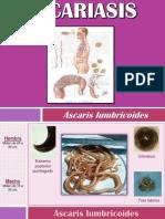 Ascariasis_Áscaris lumbricoides_