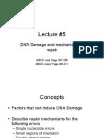 DNA Damage Repair Mechanisms