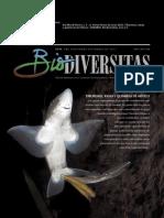 Tiburones Rayas y Quimeras en Mexico