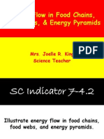 Food Chains Webs and Energy Pyramids Ppt