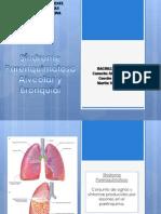Imagenologia SD Alveolar Completo