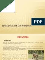 Rase de Suine Din Romania