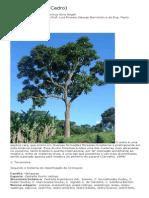 Cedro - Cedrella fissilis - Aline Angeli.pdf