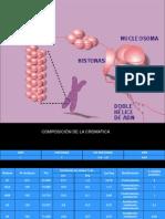 Cromosomas y Cromatina