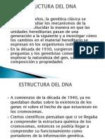 Estructura Del DNA