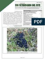 Archivo Veterinario Del Este - 2013