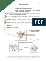 Menispermaceae 2