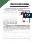 Sistema Urinário e Genitais Masc e Fem - Parte 7