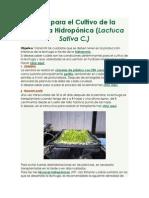Guía Para El Cultivo de La Lechuga Hidropónica