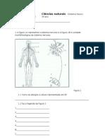Ciências naturais 9º sistema neuro-hormonal