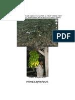 20130110caracterizacion Agroecologica Finca Buena Vida
