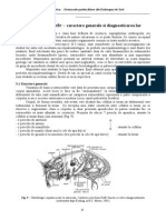 Morfologia ostracodelor
