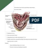 Anatomi Dan Histologi Prostat