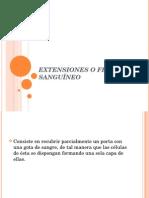 Clase 04 Frotis Sanguineo y Tinciones Hematológicas