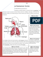 respiratory system - answer key