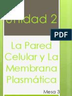 Unidad 2.- La Pared Celular y Membrana Plasmática
