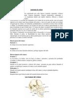 PEDIATRIA Cara, Craneo y Nariz (1) (1)