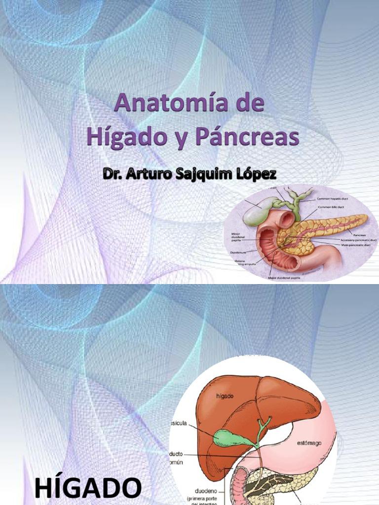 Anatomía de Hígado y Páncreas.pptx