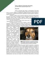Generalidades Prurito Canino