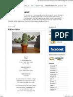 Amigurumi - Cactus