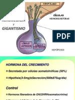 # 1 Gigantismo-Acromegalia
