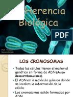 Clase de Cromosomas y Genes (1)