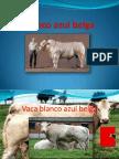 Blancoazuljosramirez9a 110814185409 Phpapp02 (2)