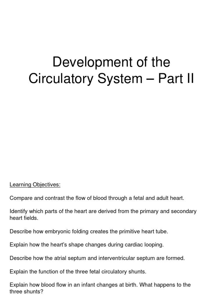 Circulatory System Part 2 4 8 14 For Bb Atrium Heart Aorta