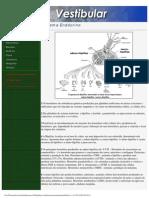 Resumos Vestibular - Biologia - Sistema Endócrino