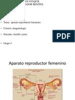 Salvador Benites Luis Alberto Aparato Reproductor Femenino