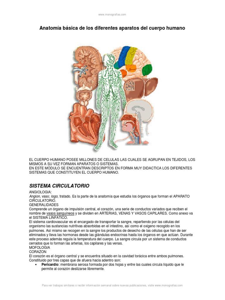 Anatomia Basica Cuerpo Humano