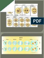 meiosis 1 y 2 vanessa zambrano.pptx