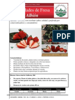 albion(1)