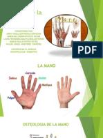 Miología de La Mano