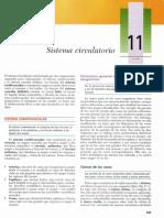 Histologia de Gardner-S.circulatorio