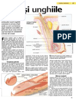 Parul si unghiile.pdf